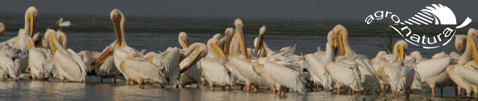 Agro-Natura-Donaudelta-Roemenie-vogelreis.jpg