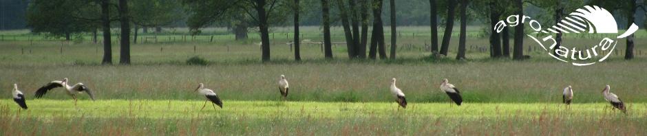 Agro-Natura-Ooievaars-1.jpg