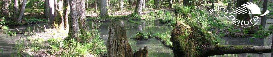 Agro-Natura-natuurreizen-Oerbos-Bialowieza.jpg