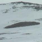 Steenarend-Valt-Rendieren-Aan-Hardangervidda-Noorwegen