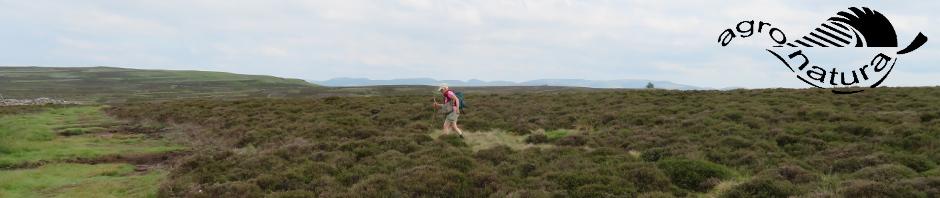 Agro-Natura-Yorkshire-Moors1.jpg