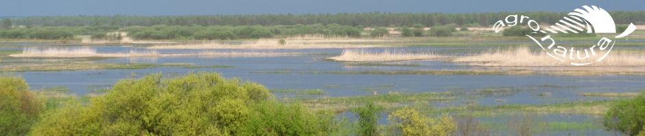 Agro-Natura-natuurreizen-Biebrza-Burzyn-Voorjaar.jpg