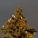 Ooievaar-kerstboom