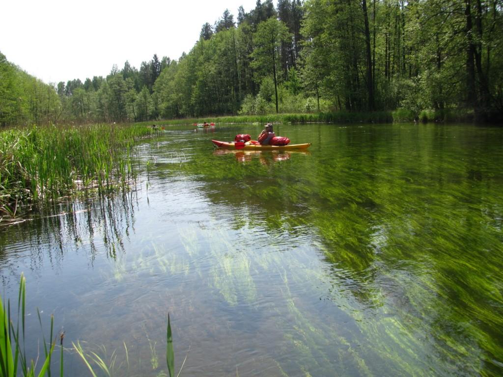 Het riviertje de Czarna Hancza, overal kraakhelder water.